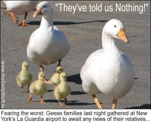 Geese involved in the US Air incident in NY in June are still awaiting news of the fate of their family members.