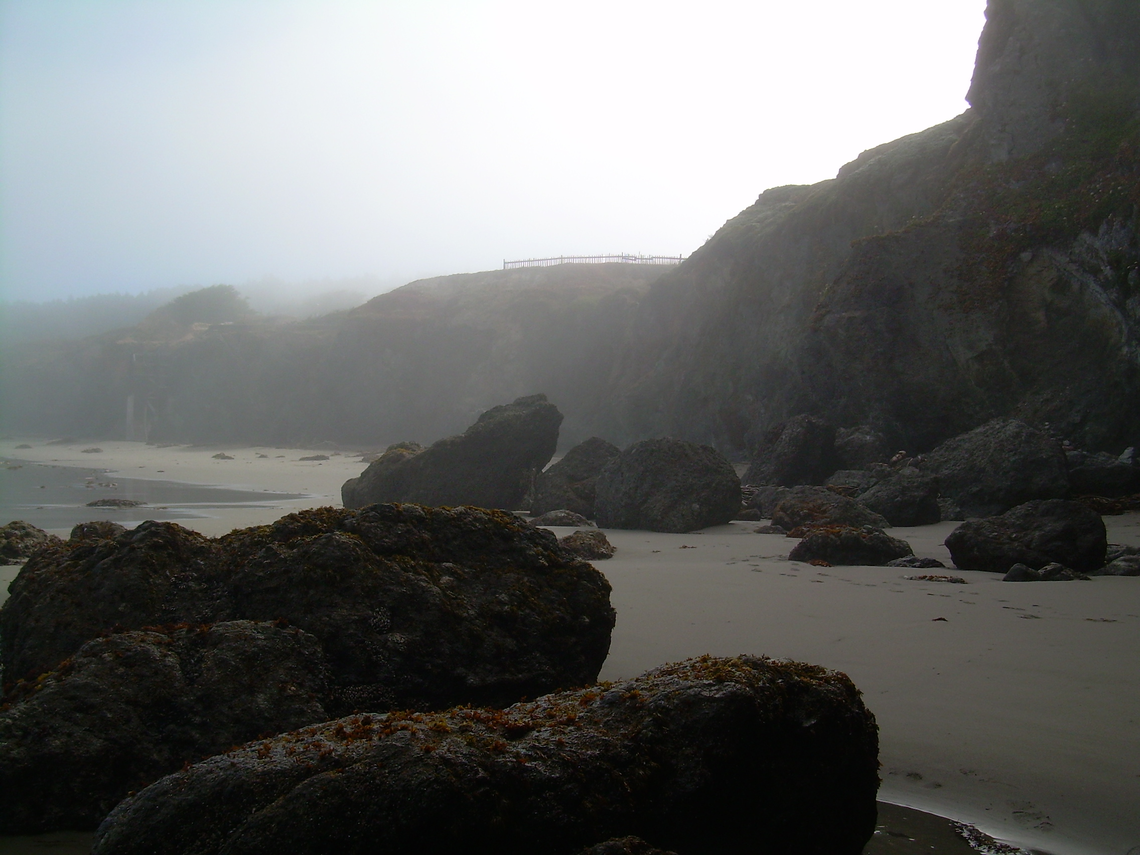Black Point Beach, Sonoma County, California in the fog