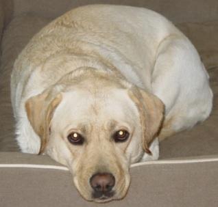 Gracie the Dog